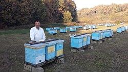 Pčelar.jpg
