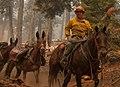 Packer on horseback in Klamath National Forest (16182523668).jpg
