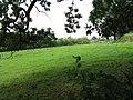 Paddock at The Brook - geograph.org.uk - 947405.jpg