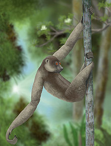 A giant lemur, Palaeopropithecus ingens, hangs upside down by its long arms and legs, suspended from a branch by curved digits on its hands and feet.
