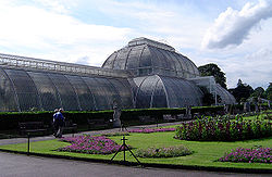 Palm House (glasshouse), Royal Botanic Gardens, Kew, London.jpg