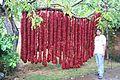 Paprika in Serbien Seeds of Hope.jpg
