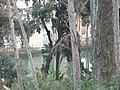 Parc del Laberint P1080882.JPG