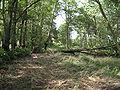 Park Dranske-Lancken - Park 4.JPG