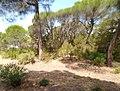 Parque de Doñana 20210610 62.jpg