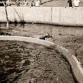 Parque del Este 1968 003.jpg