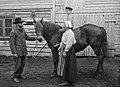 Persson Family and horse, Dalarna, Sweden (5692317675) (2).jpg