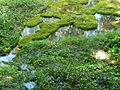 Petrifying well in Knaresborough 01.JPG