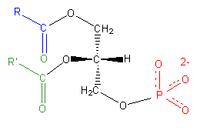 磷脂酸是最简单的二酰基甘油磷脂. [1]图片