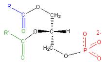Image result for WHAT IS PHOSPHATIDIC ACID?