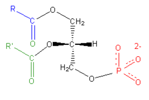 Phosphatidic acid - General chemical structure of phosphatidic acids