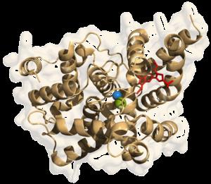 Phosphodiesterase inhibitor - Phosphodiesterase-5
