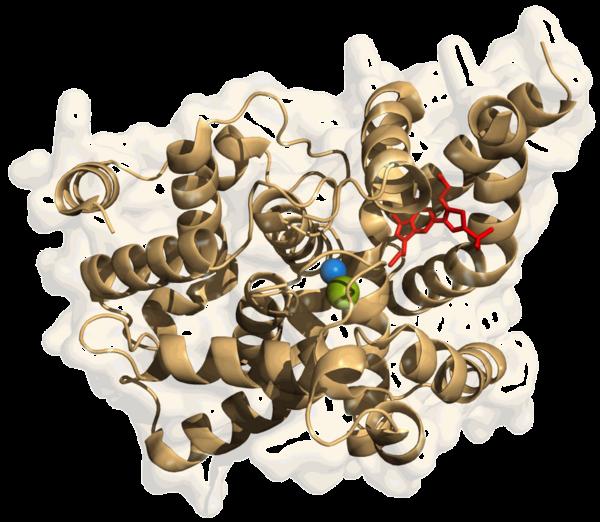 sildenafil phosphodiesterase 5