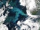 Phytoplankton Bloom in the North Sea.jpg