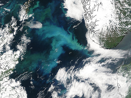 Phytoplankton bloom in the North Sea Phytoplankton Bloom in the North Sea.jpg