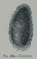 Picture Natural History - No 260 - Cocoon.png