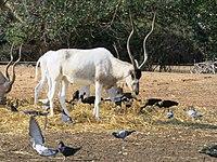 PikiWiki Israel 53064 wildlife animals.jpg