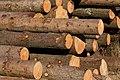 Piles of marked logs.jpg