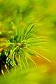 Pine Tree Detail.jpg
