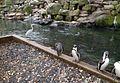 Pinguins en reigers.jpg