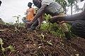 Planting of vegetables.jpg