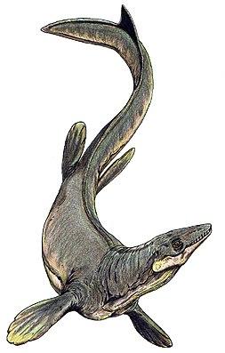 Lebendrekonstruktion von Plioplatecarpus