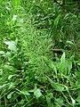 Pod Farským lesem 27.jpg