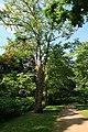 Poensgenpark-11-06-2015 205.jpg