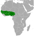 Poicephalus senegalus range map.png