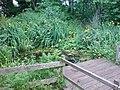 Pond, Railway Fields Nature Reserve - geograph.org.uk - 1374244.jpg