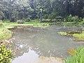 Pond View 20170706 160220.jpg