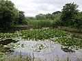 Pond at Great Briddlesford Farm - geograph.org.uk - 472515.jpg