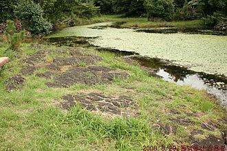 Gotjawal Forest - Gotjawal Forest pond