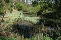 Pond in Temple Wood - geograph.org.uk - 407569.jpg