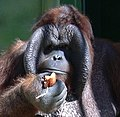 Pongo-Headshot.jpg