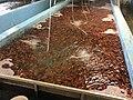 Pool Fisheries 01.jpg