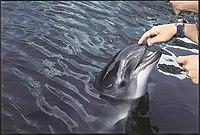 Porpoise touching