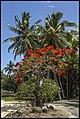 Port Douglas Coloured trees-1 (15815888548).jpg