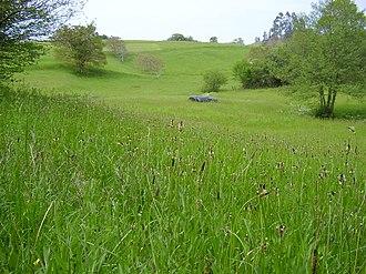 Cantabria - Grassland in Valdáliga