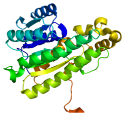 Protein HPGD PDB 2gdz.png