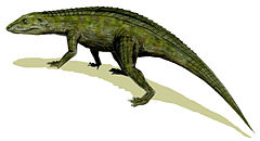 Protosuchus, un crocodiliform primitiu