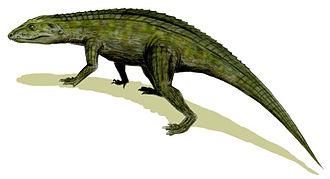 Crocodyliformes - Protosuchus, an early crocodyliform