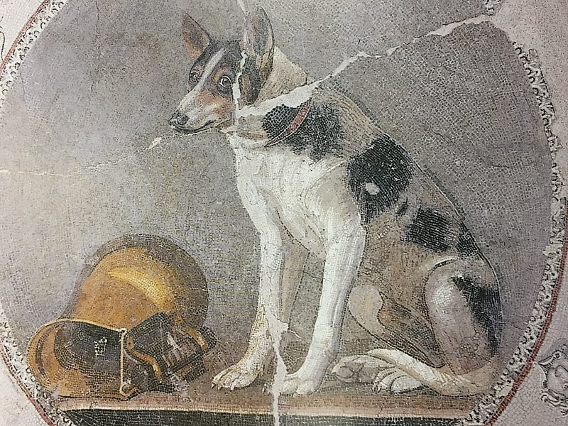 https://upload.wikimedia.org/wikipedia/commons/thumb/5/50/Ptolemaic_roundel_from_a_mosaic_floor_decorated_with_a_dog_and_a_gilded_askos%2C_from_Alexandria%2C_Egypt%2C_c._200-150_BC.jpg/800px-Ptolemaic_roundel_from_a_mosaic_floor_decorated_with_a_dog_and_a_gilded_askos%2C_from_Alexandria%2C_Egypt%2C_c._200-150_BC.jpg