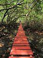 Puente sobre el manglar.jpg
