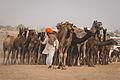 Pushkar, Rajasthan - India (15975523765).jpg