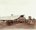 Queensland State Archives 4005 Wool carting and shed Jondaryan 2 November 1894.png