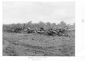Queensland State Archives 4346 Windrows prior to burning at the Childers Soldiers Settlement 1950.png