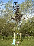 RAF Lakenheaths SARC team fosters culture of dignity and respect 140417-F-QO662-011.jpg