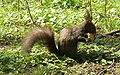 RO-HD-Deva-Park-Squirrel.20080407.jpg