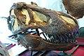 ROM 50 - Cráneo de T-Rex (14173106387).jpg
